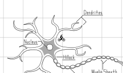 Just a Neuron