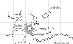 Just a Neuron