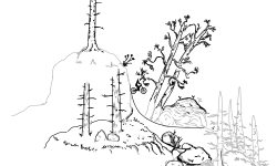 Plantation [NTBF]