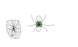 spider?!