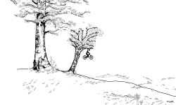 Valiant Woods